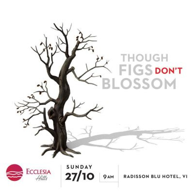 Figs dont blossom